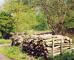 Logs stacked to season over the summer